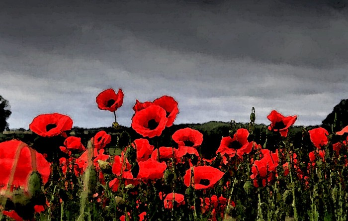 remembrance_day_poppies