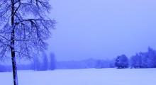 winter_doldrum_landscape-4