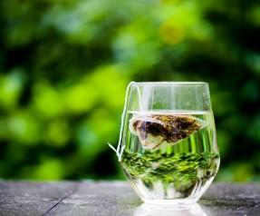green_tea (2)